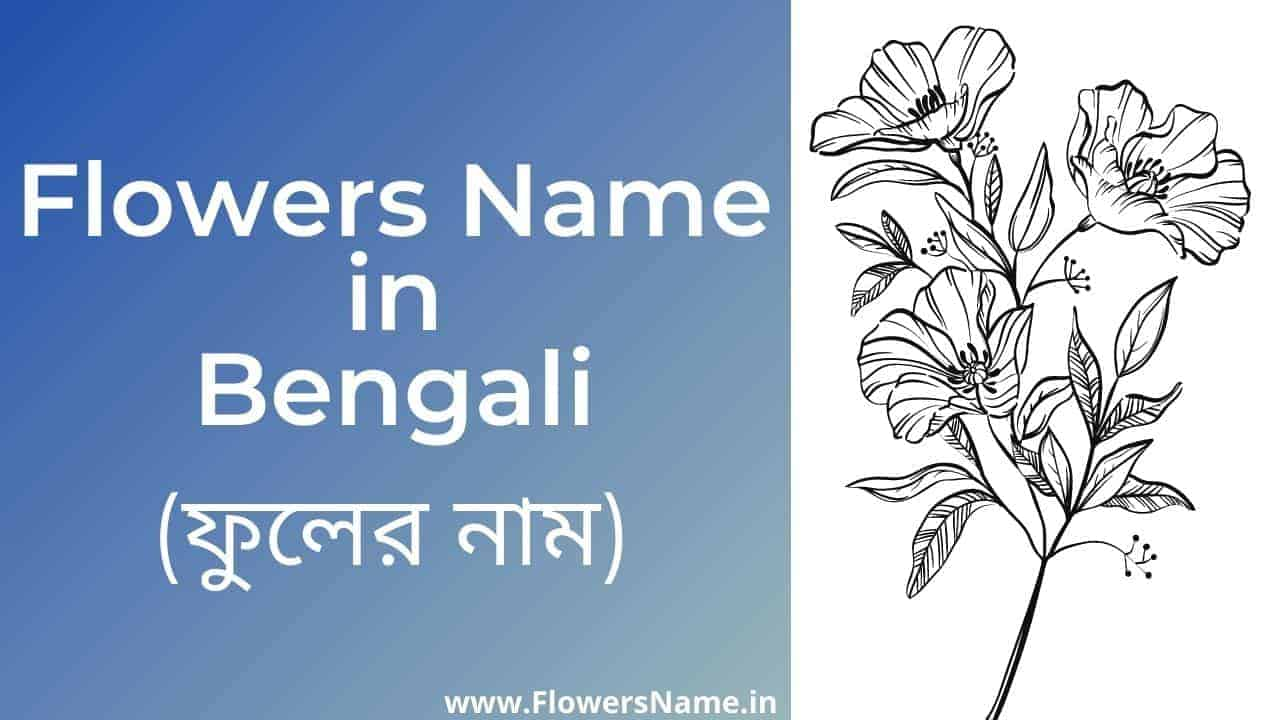 Flowers Name in Bengali