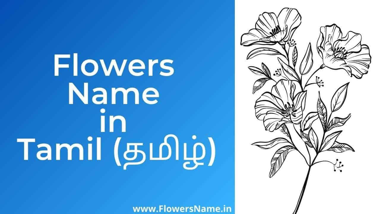Flowers Name in Tamil