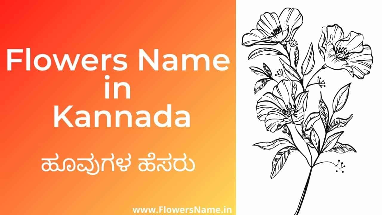 Flowers name in kannada